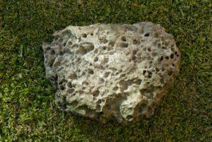 Figura 2. Bloco de calcário do oppidum de Cacia, reutilizado, no início do século XX, na construção de uma barreira na margem do Vouga, no lugar do Mossaínho. Exumado das águas em 2007. Foto: Gustavo Ramos.